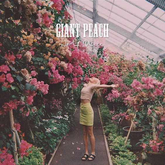 TRACK OF THE DAY: Wolf Alice 'Giant Peach' - http://blog.bluecornerstore.co.uk/reviews/2015/track-of-the-day-wolf-alice-giant-peach/ After endless stunning singles and EPs, Wolf Alice are releasing their debut album 'My Love Is Cool' at last on June 22nd. With a tracklist graced by the band's classics such as the garage cascade of 'Fluffy', the winsome 'Bros' and their new feral single, 'Giant Peach'. They even released a 500-...