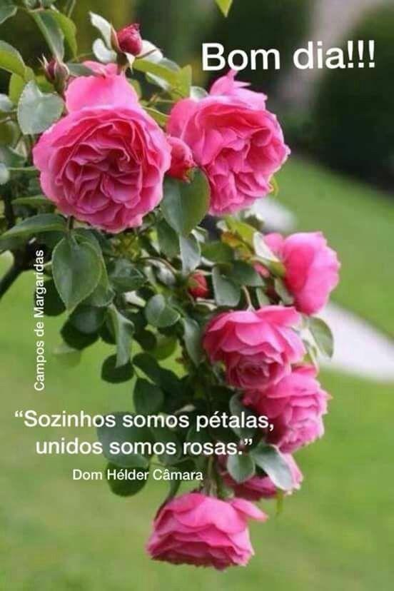 Bom Dia Bb Com Imagens Flores Bonitas Amor Flores Rosas
