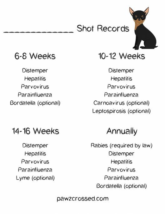 Free Shot Record Printable For All Your Puppies Shots It S Very Important To Ke Dog Shots Puppy Health Pet Health Record