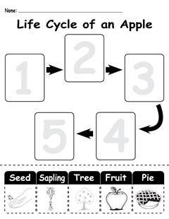 "This worksheet is great for teaching children about the ""life cycle of an apple""! This fun, free worksheet will also help with fine motor skills, ordering, number recognition, scissor skills, and more!"