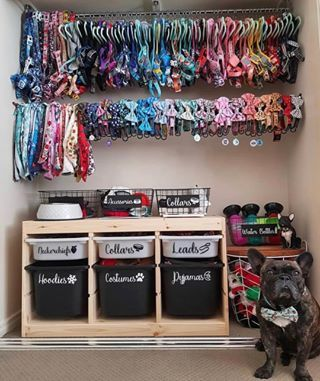 Dog Harness For Big Small Dogs Big Little Dogs Dog Bedroom Dog Rooms Puppy Room