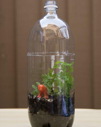 Build A Terrarium Sodas Life Cycles And Science Topics