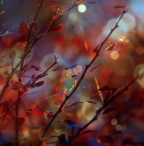 Whispers of Autumn ...by ~SvitakovaEva on deviantART #autumn #art