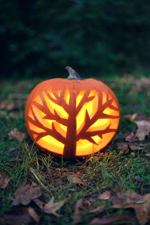 Pumpkin carving trees pumpkins and