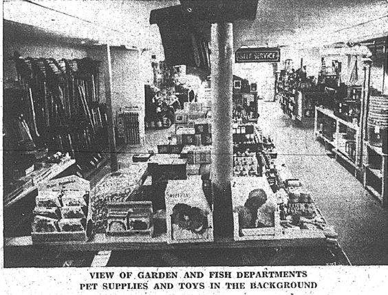 Harveys opening of basement 1955