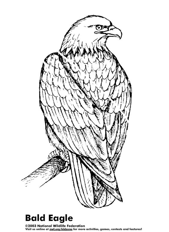 coloring pages coloring and bald eagle on pinterest