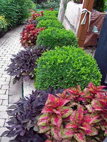 Boxwoods or other evergreens alternated with pops of color (heuchera, trailing rosemary, phlox, etc)