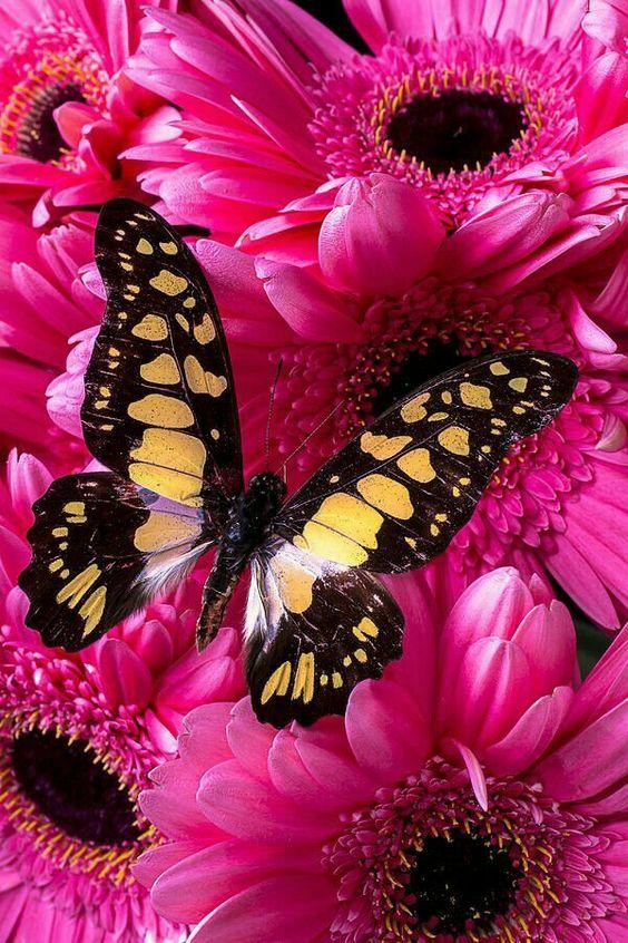 un papillon : - Page 2 5cf281dd54cb5a2f81947aae86bc63cb