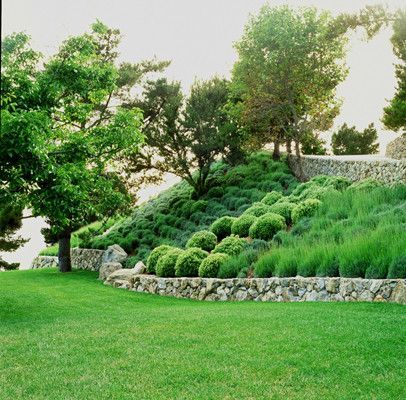 Need To Fix The Hillside At The Backyard With Low Maintenance Ornamental Grass Like With Steep Hill Landscaping Hillside Landscaping Steep Hillside Landscaping