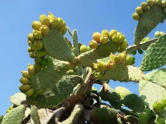 الصبار Plants Cactus Plants Cactus