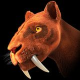 Saber-toothed cat - Wikipedia, the free encyclopedia