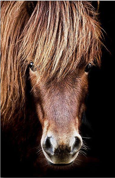 Porträt eines Ponys