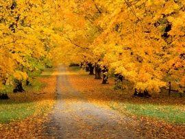 Imagen de un camino con flores secas