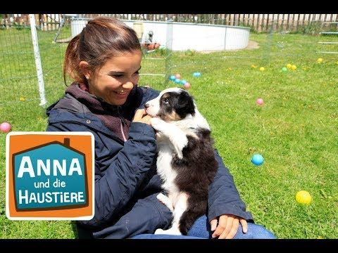 Border Collie Reportage Fur Kinder Anna Und Die Haustiere