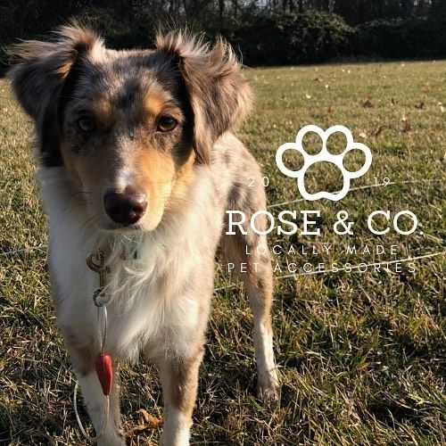 Hey Springfield Were Rose Co A Pet Accessories Shop Opening Up In February 2019 We Will Be Selling Our Bandanas In February But W Pets Pet Accessories Dogs