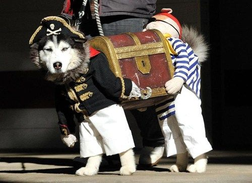"""Says @chiefbrody1984: """"If you've seen a better picture of a dog dressed as two pirates carrying a treasure chest today, I don't believe you."""""""