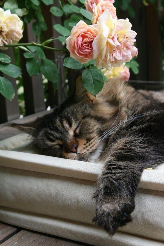 Nap time:
