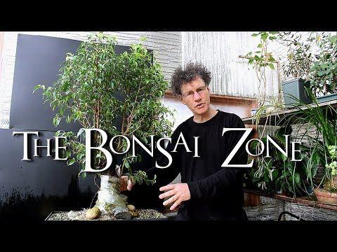 Ficus Benjamina Fusion Project Update The Bonsai Zone April 2018 Youtube In 2020 Bonsai Ficus Benjamina Ficus