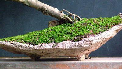 Associação Bonsai Mato Grosso - ABMT: Vaso orgânico de cimento sobre fôrma de jornal e argila