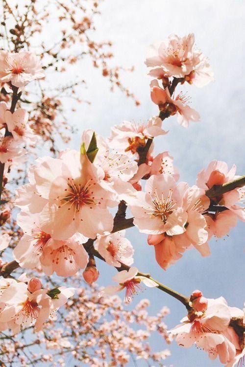 35 Gentle Og Pleasing Floral Baggrunde Flower Iphone Wallpaper Flower Aesthetic Spring Wallpaper