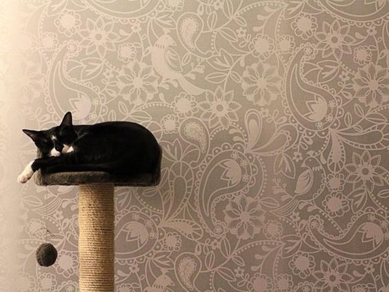 Tips for living stylishly with your cat: Provide plenty of toys to keep felines from damaging furniture or fixtures. > http://www.hgtv.com/decorating-basics/how-to-outsmart-your-cat-and-have-a-stylish-home/pictures/index.html?soc=pinterest