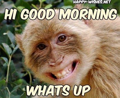 Funny Monkey Good Morning Photos Funny Good Morning Memes Morning Quotes Funny Monkeys Funny
