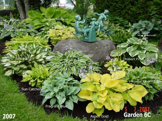 Landscaping Ideas Hosta Plants : Hosta gardens and the late on