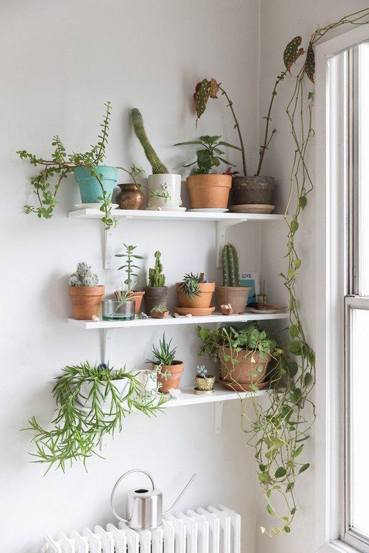 Interior Designer Tips Best Small Space Home Accessories Plants Plant Wall Bathroom Plants