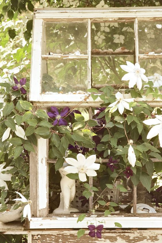 erin's art and gardens~mini greenhouse made from old windows!