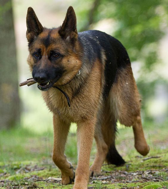 Parmi toutes les races de chien, certaines sont beaucoup plus populaires que d'autres