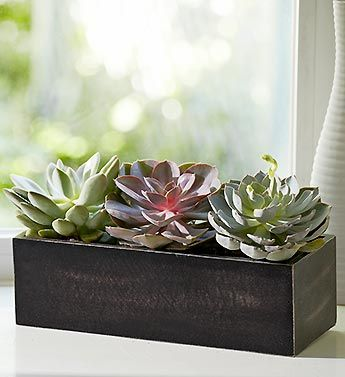 love succulents.. need green in my apartment!: