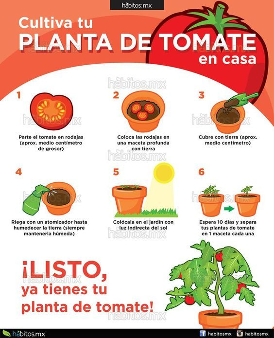 Pin On Alimentos