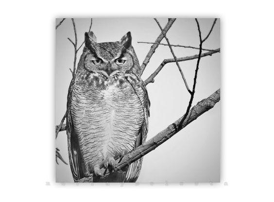Owl Print, Great Horned Owl Print, Owl Photograph, Black and White, Owl Art, Bird Art, Murray Bolesta