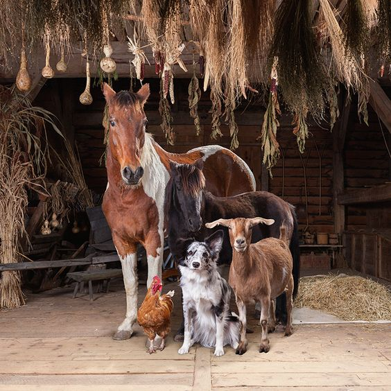 Animal Listed In Livestock Insurance Scheme