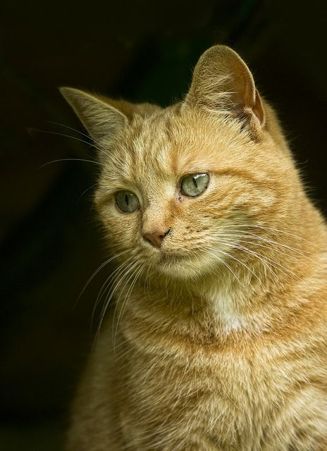 My Neighbours Cat by Alistair Hobbs, via Flickr