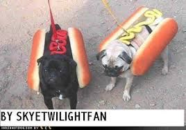 funny_pugs - Google Search