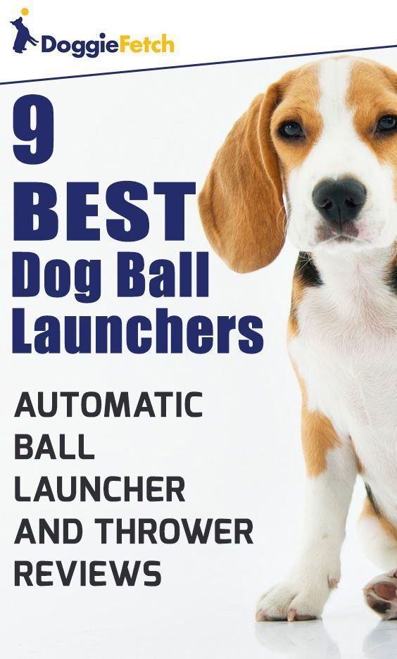 Home With Images Dog Ball Best Dog Food Best Dogs