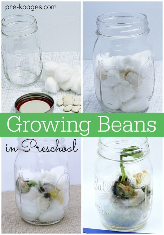 Planting And Growing A Beanstalk In Preschool Jack O