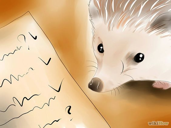 How to Buy a Hedgehog: 8 Steps (with Pictures) - wikiHow