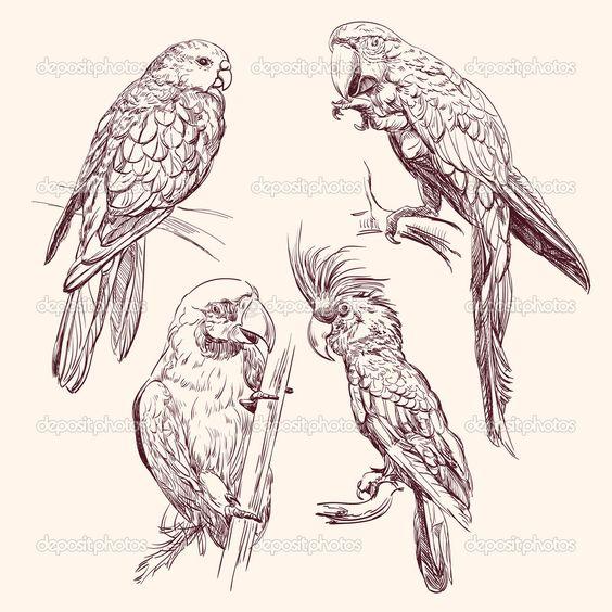 depositphotos_13170184-Parrot--collection---vector-llustration.jpg 1,024×1,024 pixels
