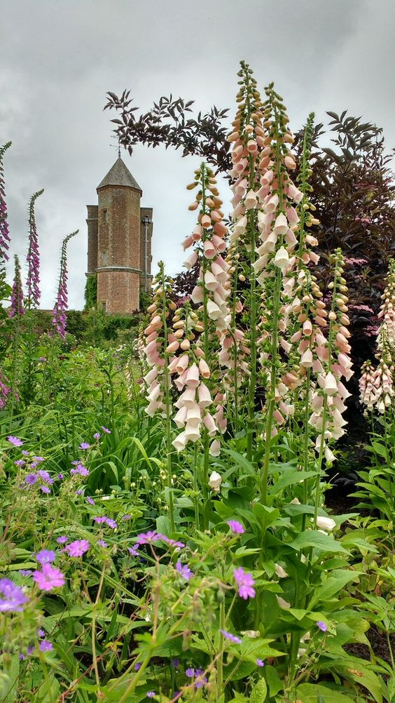 """pagewoman: """" Sissinghurst Foxgloves 💐 by Emily Darby """""""