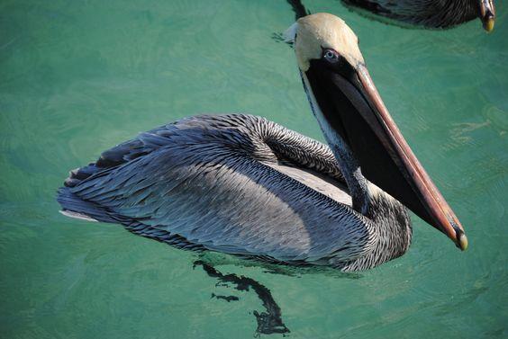 Not cheeky, just beaky!
