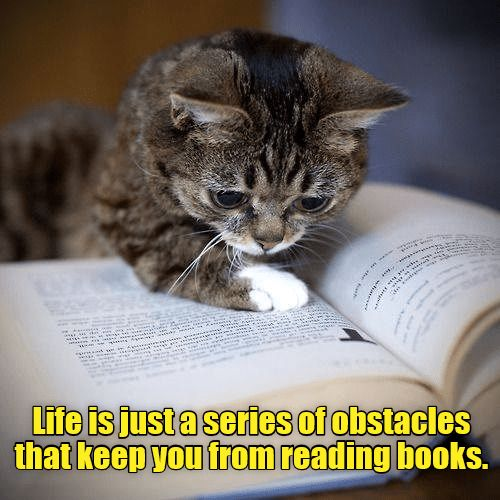 Read Any Good Books Lately Https Cheezburger Com 9280065280 Books Cat Books Library Quotes