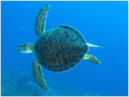 Swim Swimming And Ninja Turtles On Pinterest