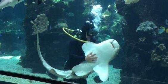 """VIDEO Virali Animali: uno squalo leopardo si fa accarezzare """"dall'uomo delle pulizie"""""""