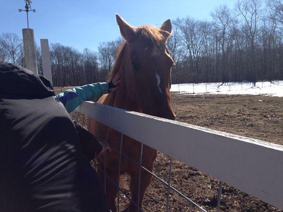 My aunts beautiful horse Jetta