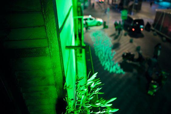 Hierbas de botica / Pharmacy herbs