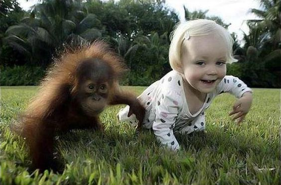 Baby orangutan and baby human.