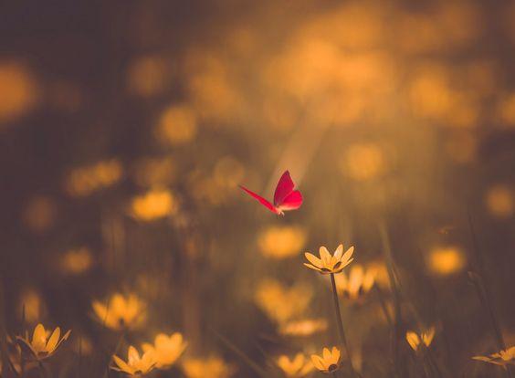 Supongo que tienes dulces para hartar... jajajaja... así que yo te deseo dulces sueños, para hoy y todos los días... Muchas felicidades, bonita, un besazooooo!!!