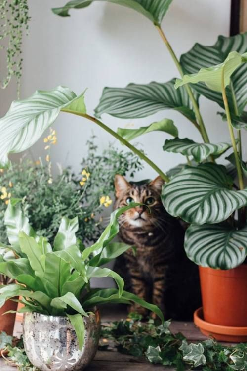 Piante Da Appartamento E Gatti.Il Gatto Nascosto Decorazioni Vegetali Giardinaggio Urbano E